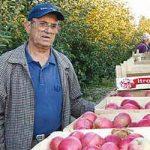 Јабука се по мирису познаје
