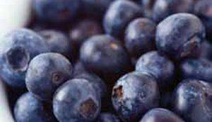 plave-borovnice-u-sumadiji