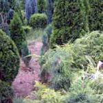 Оаза школованог дрвећа