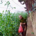 ПОВРЋЕ НА ЈУГУ СРБИЈЕ: Отишли Кинези – остао Бобан
