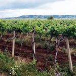 ТИКВЕШ: Вино није само бизнис, већ уживање у послу