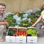 """""""ЗЕЛЕНИ ХИТ"""": Плодови савремене агротехнологије"""