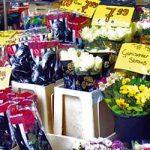 S KRAJA NA KRAJ NEMAČKE: Cveće, zelenilo i zdrava hrana