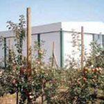 Јабуке на 23 хектара