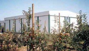 jabuke-na-23-hektara