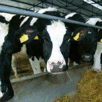 Јеремићи имају више крава него цело село