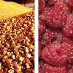 Kukuruz i maline i dalje glavni u izvozu