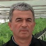 ПАУЛОВНИЈА НА ПРЕШЕВСКИМ ПОЉИМА, НА ЈУГУ СРБИЈЕ: Дрво будућности пружа могућност за добру зараду