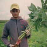 ЈОВАН ЛАЗАРЕВИЋ: Продамо све што засадимо