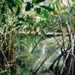 IUCN standard ojačaće uticaj rešenja zasnovanih na prirodi kao odgovor na brojne globalne izazove